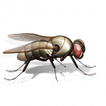 Free download of Fly PNG Picture