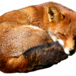 Download for free Fox Icon