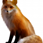 Best free Fox PNG