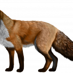 Download this high resolution Fox Icon PNG
