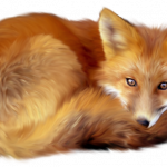Free download of Fox High Quality PNG
