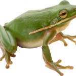 Grab and download Frog Icon