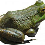 Best free Frog Icon
