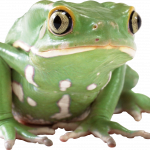 Now you can download Frog High Quality PNG