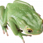 Grab and download Frog  PNG Clipart
