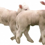 Download this high resolution Goat Icon PNG
