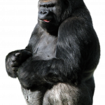 Download for free Gorilla PNG