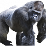 Grab and download Gorilla PNG Picture
