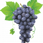 Download and use Grape PNG Icon