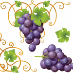 Download this high resolution Grape PNG Image