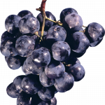 Now you can download Grape High Quality PNG