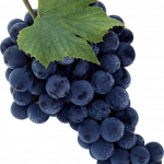 Grab and download Grape PNG Picture