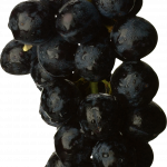 Now you can download Grape  PNG Clipart