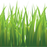 Grab and download Grass PNG Picture