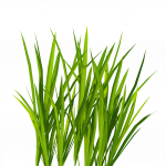 Download and use Grass  PNG Clipart