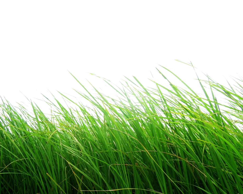 Now you can download Grass Transparent PNG File