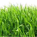 Free download of Grass PNG Icon