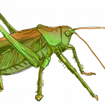 Download and use Grasshopper PNG Image
