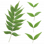 Now you can download Green Leaves Icon Clipart