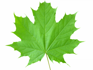 Free download of Green Leaves High Quality PNG
