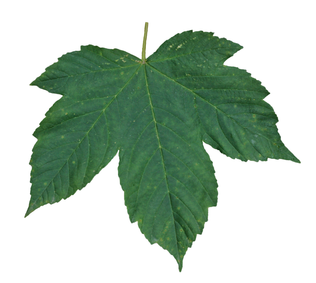 Best free Green Leaves Icon