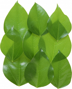 Download and use Green Leaves Icon Clipart