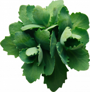 Best free Green Leaves PNG Image