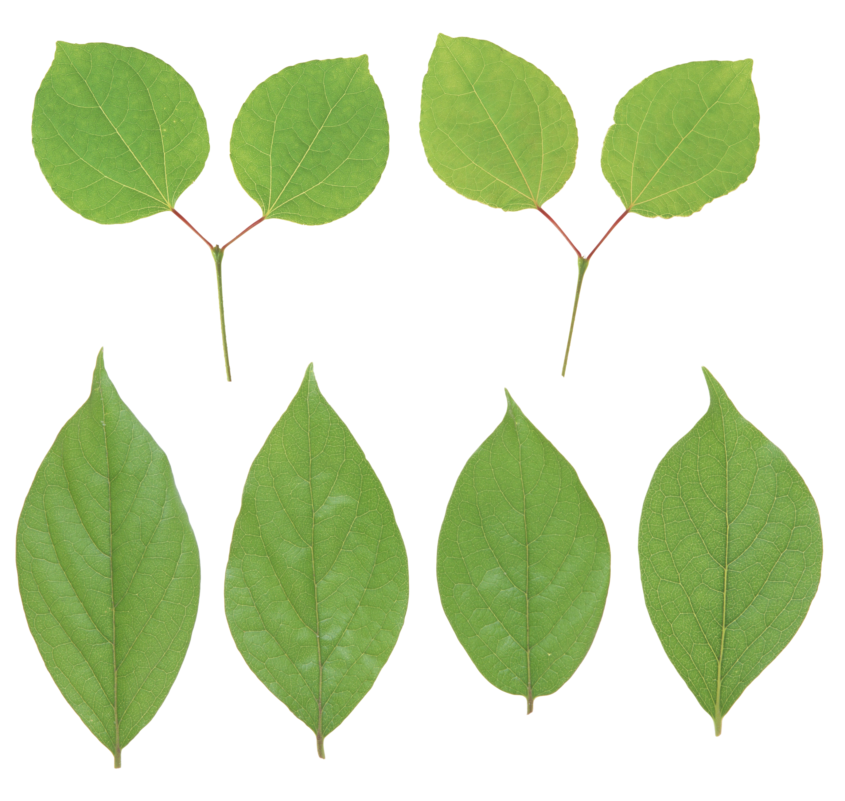 Green Leaves PNG Image | Web Icons PNG