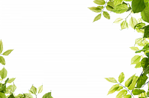 Download this high resolution Green Leaves PNG