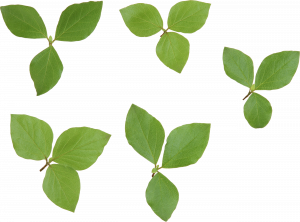 Best free Green Leaves PNG Picture