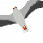 Download this high resolution Gull  PNG Clipart