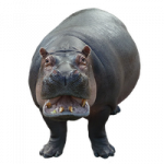 Now you can download Hippo Transparent PNG File