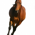 Download this high resolution Horse PNG Icon