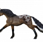 Download for free Horse Transparent PNG Image