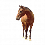 Free download of Horse In PNG