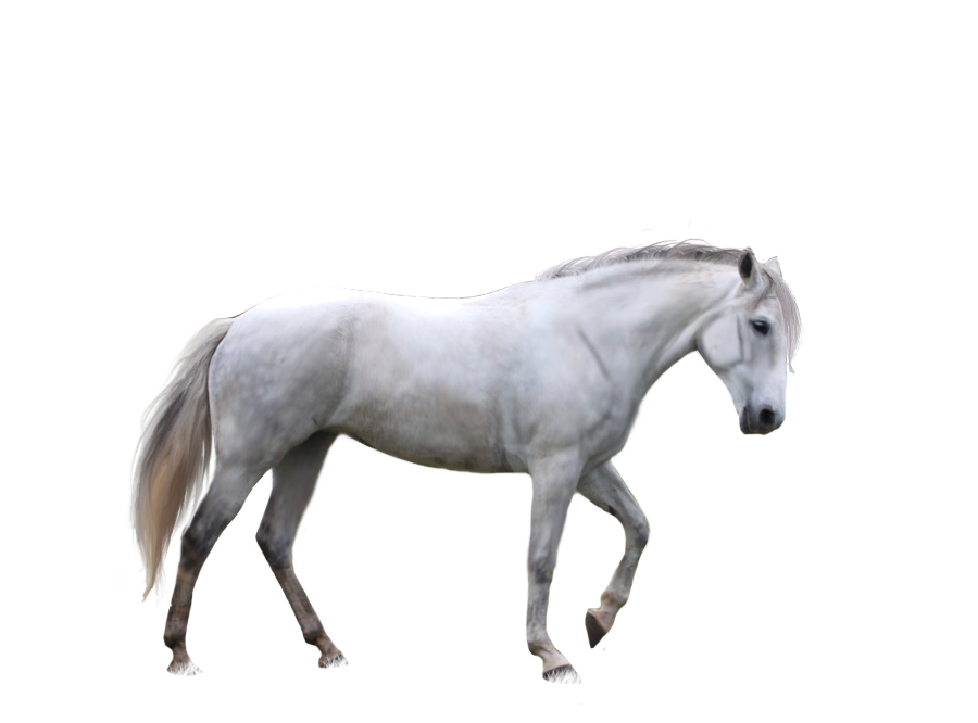 horse png image web icons png
