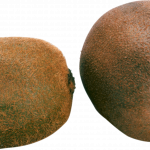 Download and use Kiwi PNG