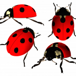 Download for free Ladybug High Quality PNG