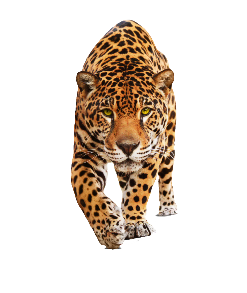 Download and use Leopard Icon Clipart