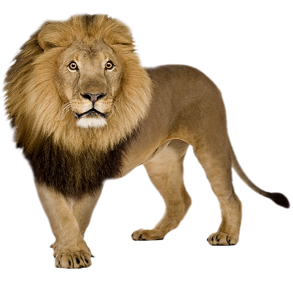 lion icon web icons png