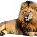 Download for free Lion  PNG Clipart
