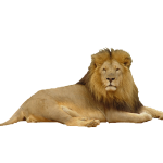 Download this high resolution Lion High Quality PNG