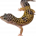 Grab and download Lizard Icon PNG