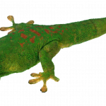 Download for free Lizard PNG Picture