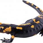 Download for free Lizard Icon Clipart