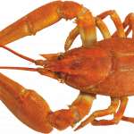 Download and use Lobster High Quality PNG