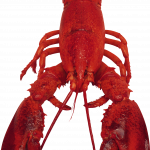 Free download of Lobster PNG Image Without Background