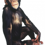 Now you can download Monkey PNG Image Without Background