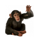 Free download of Monkey  PNG Clipart