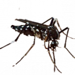Free download of Mosquito PNG Icon